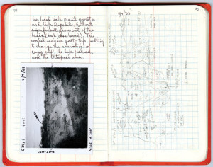 Field Notes from the Wilderness